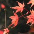 Photos: 秋の忘れ物 015