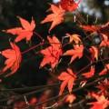 Photos: 秋の忘れ物 013