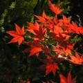Photos: 秋の忘れ物 020