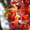 Photos: 秋の忘れ物 037