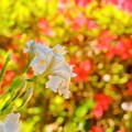 Photos: 白昼夢?