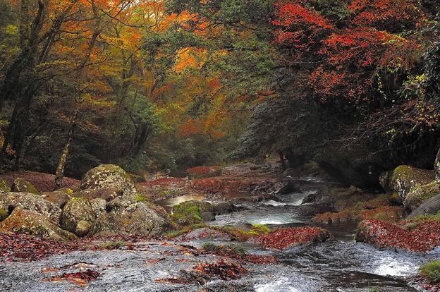 写真: 菊池渓谷紅葉?
