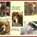 Photos: ゴン・・・色々な表情