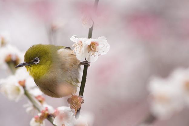 Photos: 水もしたたるいい小鳥