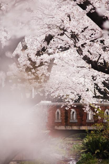 Photos: 桜重なる