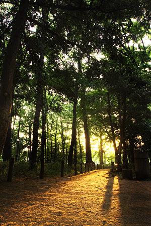 朝陽入る林