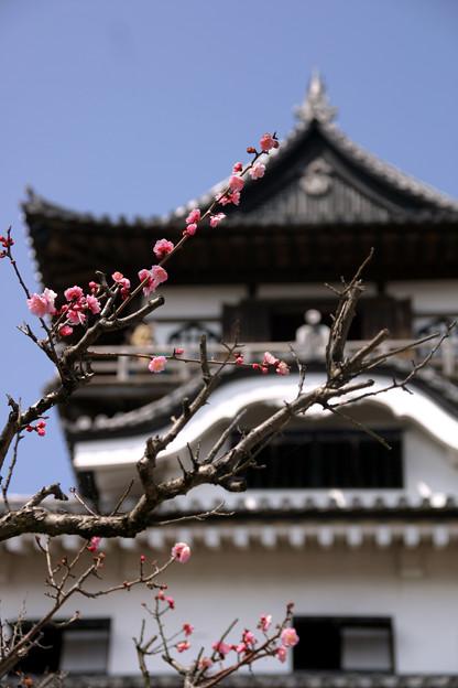 犬山城と梅