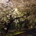 Photos: 夜の呑川緑道