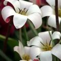 写真: まるで造花