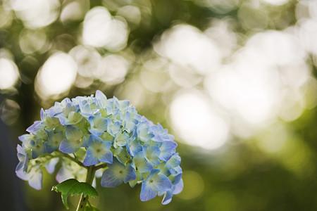 花のオーラ