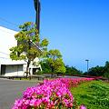 写真: ツツジの咲くしまなみ球場前 in びんご運動公園
