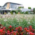Photos: 06-09-30 花の美術館と花壇の花々