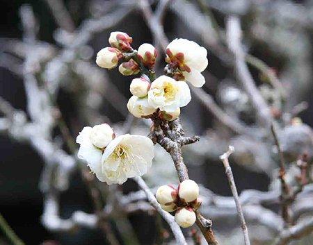 yuzanji-210125-9