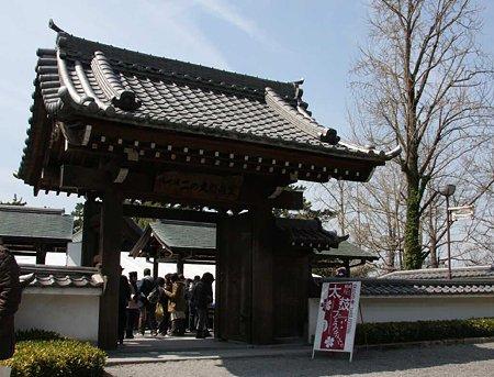okazakizyou sakuramaturi-210328-10