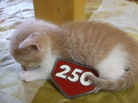 James KOZO 排気量25.0cc  猫はこぞ