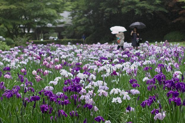 Photos: 梅雨時