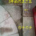 Photos: 080528_1801~0001