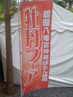 牡丹フェア(5月6日、鶴岡八幡宮)
