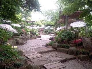 牡丹神苑(5月6日、鶴岡八幡宮)