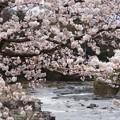 Photos: 桜_川 C04010