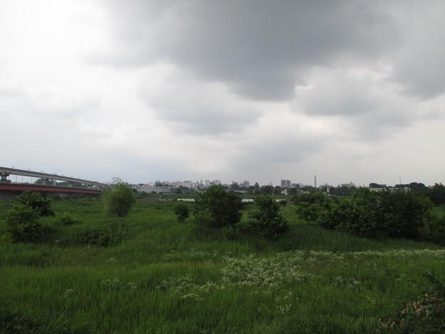 日野渡船場跡(多摩川)