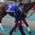 ジェンティルドンナ(5回東京8日 11R 第33回 ジャパンカップ(GI)出走馬)
