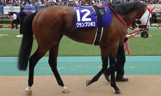 グランプリボス(3回東京2日 11R 第64回 農林水産省賞典 安田記念(GI)出走馬)