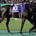 Photos: ドリームバレンチノ(1回東京8日 11R 第31回 フェブラリーステークス(GI)出走馬)