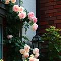~煉瓦とランプと薔薇と君~