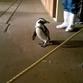 八景島 ペンギン