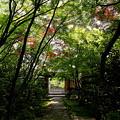 Photos: 静寂への門