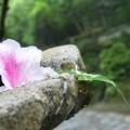 法然院!!境内には池泉と砂盛があり、善気水が湧く