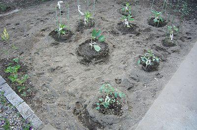 140502-7 家庭菜園