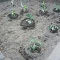 写真: 140502-7 家庭菜園