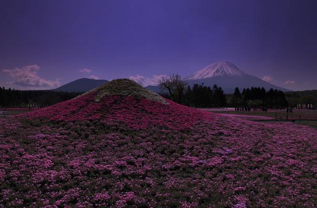 Photos: 富士山と富士芝桜