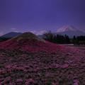富士山と富士芝桜