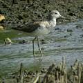 海辺の鳥2