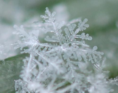 写真: コンデジ 雪の結晶