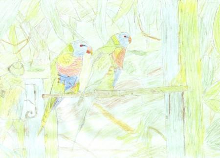 名前の知らない鳥