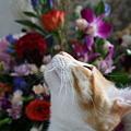 お花とルビー