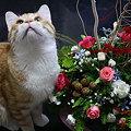 Rubyとお花たち