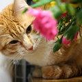 子猫とお花