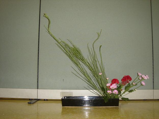 石化シダ、ケイトウ、スプレー菊