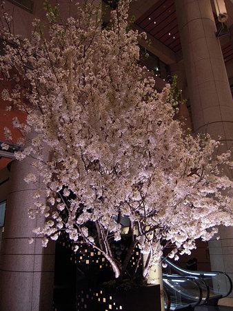 大都会の桜