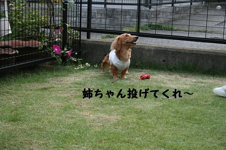 お庭で~ 7