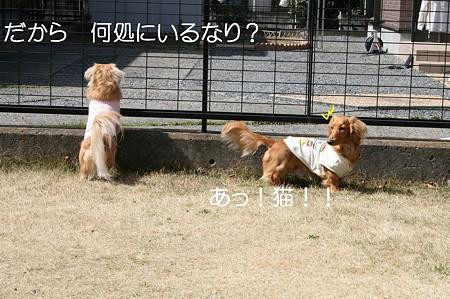 お庭で遊ぼう♪ 9