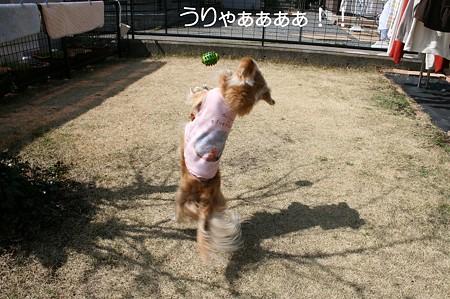 お庭で遊ぼう♪ 3