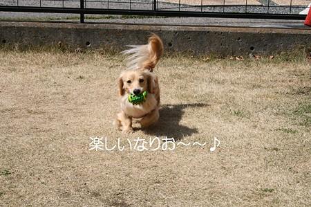 お庭で遊ぼう♪ 1