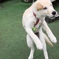 写真: 謎のダンスその1 ダンサー レンゲ(笑)