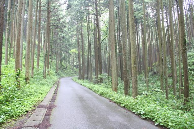 五常の滝(埼玉県日高市)5